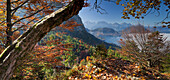 View of autumn foliage in front of lake Alpsee and Tegelberg, Ammergau Alps, Bavaria, Germany, Europe