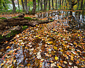 Autumn foliage on a lake in the forest, Plivice Lakes National Park, Croatia, Europe