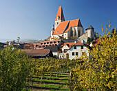 Church and vines in the sunlight, Weissenkirchen, Wachau, Lower Austria, Austria, Europe