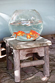 Close-up of goldfish in a fishbowl