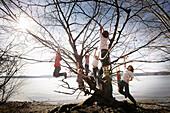 Kinder toben am Seeufer, klettern in einem Baum, Schlosspark Leoni, Leoni, Starnberger See, Bayern Deutschland