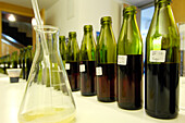 Bottles in the laboratory of winery St. Michael, Eppan an der Weinstrasse, South Tyrol, Italy, Europe
