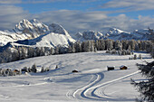 Cross country skiing trail, winter landscape with fresh snow, South Tyrol, Trentino-Alto Adige, Italy