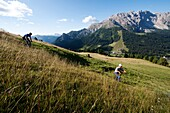 People at hay harvest, Val d'Ega, Alto Adige, South Tyrol, Italy, Europe