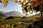 Wine-growing region in autumn, St Georg, Alto Adige, South Tyrol, Italy