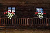Window boxes with geraniums on the balcony of a farmhouse, Alto Adige, South Tyrol, Italy