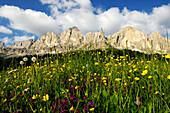 Meadow in blossom, Rosengarten, Dolomites, Alto Adige, South Tyrol, Italy