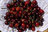 Cherries, South Tyrol, Alto Adige, Italy, Europe