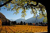 Weinfeld und Berglandschaft im Sonnenlicht, Bozen, Südtirol, Alto Adige, Italien, Europa