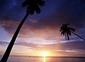 West coast beach at sunset with palm tree, Barabados