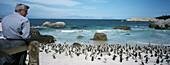 Jackass Penguins on Boulder Beach, South Africa
