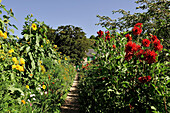 France, Normandy, Eure, Giverny, Claude Monet's house and garden