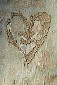 Heart on tree trunk
