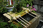 JAPON, TOKYO, Ablution basin at the entrance of a shinto shrine