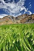 Village of Gongma with corn fields, Zanskar Range Traverse, Zanskar Range, Zanskar, Ladakh, India
