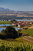 View onto the vineyards of the Asara Wine Estate, Stellenbosch, Western Cape, South Africa