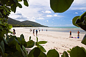 People on Cape Tribulation beach, Pacific Ocean, North Queensland, Australia