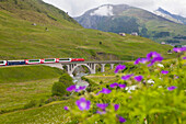 Glacier Express crossing the Richleren bridge and river Furkareuss in Urserental near Andermatt, Uri, Switzerland