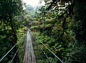 People on Skywalk through Monteverde Cloud Forest Reserve, Costa Rica