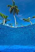 Looking up at palm trees from underwater in swimming pool, Punta Cana, Dominican Republic