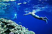 A couple snorkeling along reef edges in the Red Sea, Ras Mohammed, Red Sea, Egypt