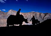 Silhouette of yak herders, Spiti, Himachal Pradesh, India