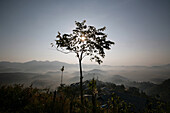 Lonely tree silhouetted on misty morning in mountains, Champhai, Mizoram, North East states, India