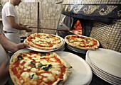 Cooks making pizzas in Pizzeria, Naples, Italy