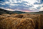 Tuscany Landscape, Tuscany landscape in Val d'Orcia, Siena, Tuscany, Italy