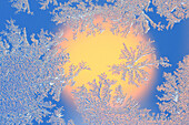 frost pattern, detail, close up, frosted, frozen, cold, ice crystal, crystals, nature, blue, white, winter