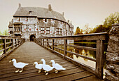 Geese on the bridge in front of Vischering moated castle, Luedinghausen, Muensterland, North Rhine-Westphalia, Germany, Europe