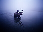 Man on elephant crossing the Rapti River at Dawn, Chitwan Park, Nepal