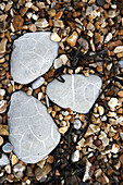 Stones on beach of Jurassic Coast, England, United Kingdom, Europe