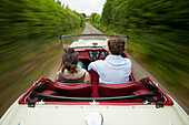 Couple driving a convertible car on a hedge lined country road / lane, East Sussex, England
