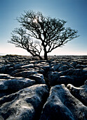 Limestone pavement at Twisleton Scars, Yorkshire Dales National Park, North Yorkshire, England, United Kingdom, Europe