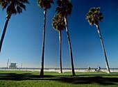 People cycling down path between Santa Monica and Venice Beach, Los Angeles, California