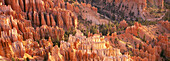 Orange rock formations and trees at Bryce Canyon, Utah, United States