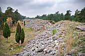 Boundry wall of the Germanic Tribe, ruin, historic sight, island Gotland, Sweden