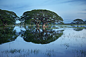 Trees stand in water of artificial lake Tissa Wewa, bog landscape, Tissamaharama, around Yala National Park, Sri Lanka