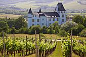 Vineyard in front of Schloß Berg, Berg castle at Perl-Nennig, Saarland, Germany, Europe
