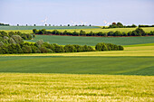 Agricultural landscape between Borg and Wehingen, Saarland, Germany, Europe