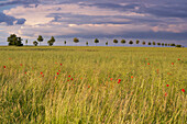 Blick über Felder unter wolkigem Abendhimmel, Bliesgau, Saarland, Deutschland, Europa