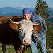 Dairymaid with cattle, Hofbauern-Alm, Kampenwand, Chiemgau, Upper Bavaria, Germany