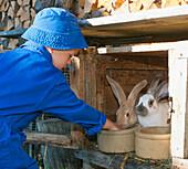 Boy feeding bunnies, Hofbauern Alm, Kampenwand, Chiemgau, Upper Bavaria, Germany