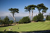 San Francisco, California, Golf Course, Lincoln Park, USA