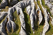 Limestone Pavement, Malham Cove, near Malham Village, Yorkshire Dales National Park, England, United Kingdom