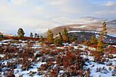 View, tree, mountain, mountains, mountain panorama, trees, Cairgorms, Cairgorms Mountains, Cairngorms, Erika, cliff, rock, cliff, mountains, moor, highlands, highland, hill, pine, living space, national park, park, panorama, snow, Scotland, Great Britain,