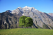 Geograpy, Nature, Europe, Switzerland, Schächental, Uri, Swiss Alps, Mountain, Tree, Hill, Field, Meadow, Tranquil, Landscape, Scenic, Spring, No People, Horizontal. Geograpy, Nature, Europe, Switzerland, Schächental, Uri, Swiss Alps, Mountain, Tree, Hill