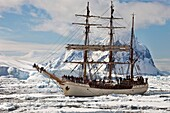 Dutch square rigged tourist ship Europa in heavy pack ice, Penola Strait, Antarctic Peninsula