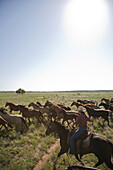 Woman on Horseback With a Herd of Horses, Texas, USA